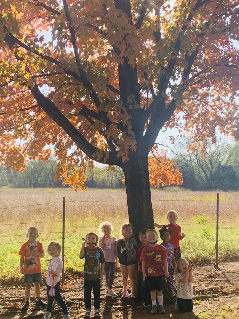 Preschool under a tree changing colors