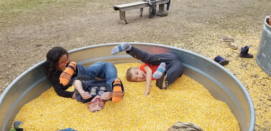 Playing in the corn!